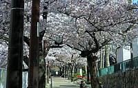outdoor, flower, street, spring, tree, plant