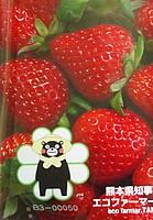 fruit, strawberry, strawberries, food, frutti di bosco, alpine strawberry, accessory fruit, berry