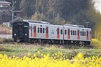grass, tree, train, track, transport, outdoor, rail, plant, vehicle, land vehicle, traveling, locomotive, engine, railroad