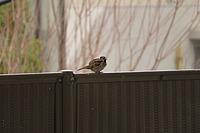 bird, animal