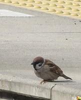 outdoor, ground, animal, bird, sparrow, cement, concrete, railing
