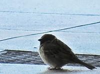 outdoor, animal, bird