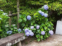 ground, outdoor, flower, spring, garden, flora, wooden, park, plant, flower garden, porch, stone, wood, bushes
