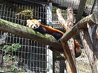 outdoor, animal, zoo, carnivore, mammal, tiger, fence