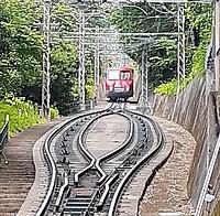 train, tree, ground, outdoor, railroad, vehicle, land vehicle, rail, text, plant