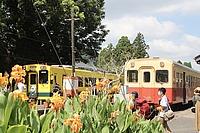 tree, outdoor, sky, train, land vehicle, vehicle, plant