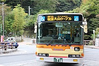 tree, text, road, outdoor, street, land vehicle, bus, vehicle, driving, city, traveling, bus stop